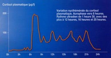 Biorythmes de l'insuline et du cortisol Jean Robert Rapin