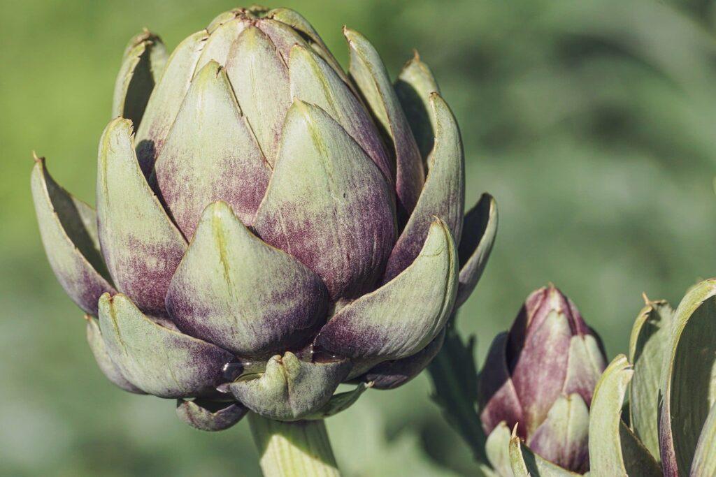 coaching nutritionnel plante detox